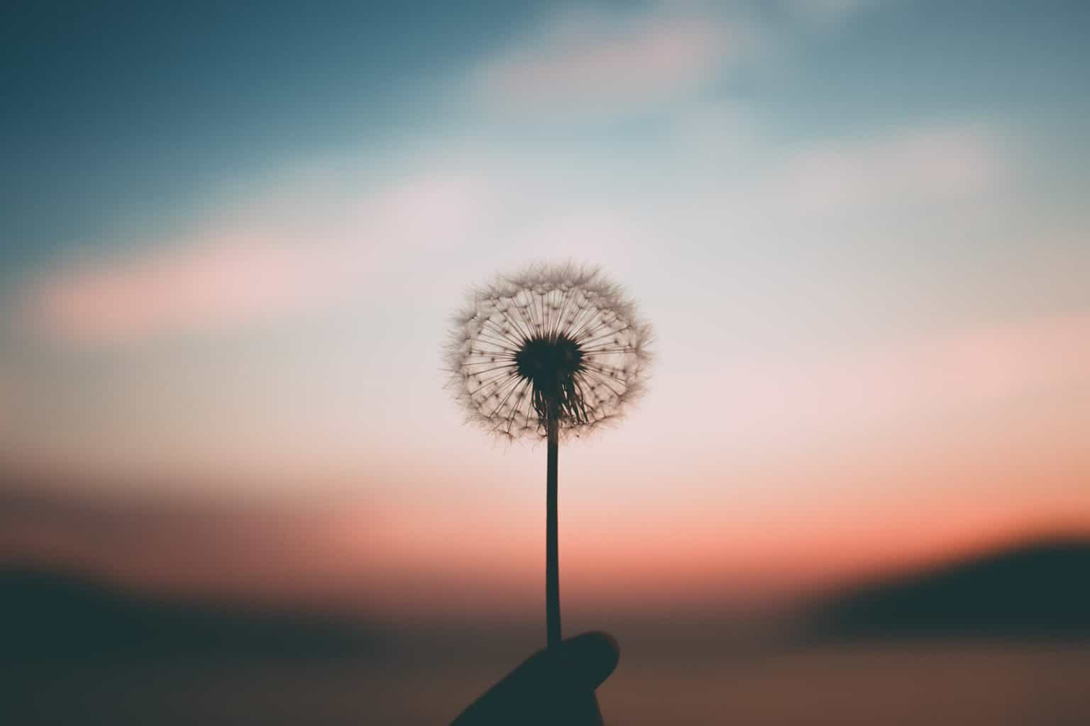 """""""The secret of health for both mind and body is not to mourn for the past, not to worry about the future, or not to anticipate troubles, but to live in the present moment wisely and earnestly."""" – Buddha"""
