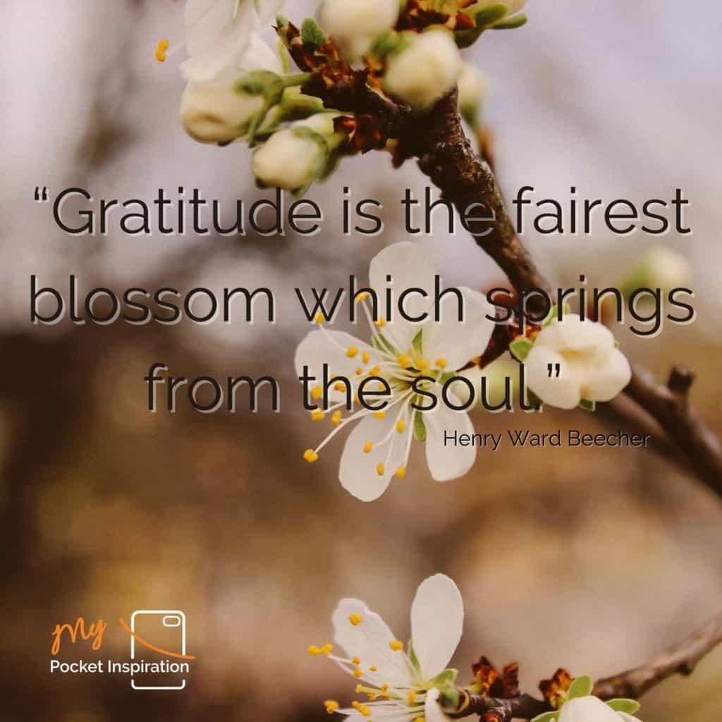 Celebrating World Gratitude Day